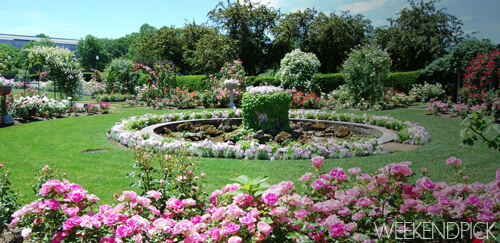 Rose Garden Back Bay Fens-WeekendPick